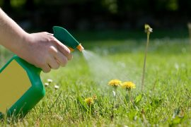 best-dandelion-killer-spray-for-lawns