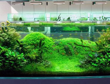 Aquatic-Aquarium-design