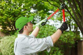 19568098 - professional gardener pruning a tree