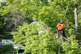 professional tree service