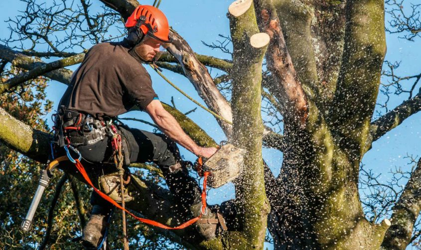 tree removal companies near me